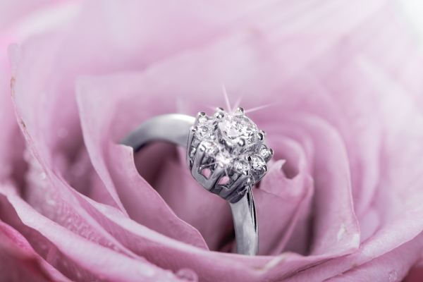 white gold ring in a rose